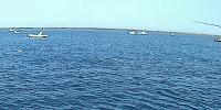 青物の釣り方・ナブラの攻め方編